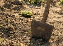 Pelle dans l'outil de jardin Photo libre de droits