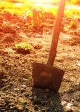 Pelle dans l'outil de jardin Image libre de droits
