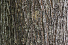 Pelle degli alberi Immagine Stock