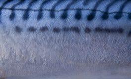 Pelle dei pesci Fotografia Stock Libera da Diritti