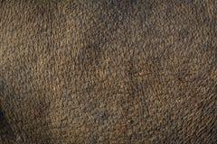Pelle del Brown Fotografia Stock Libera da Diritti