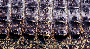 Pelle del coccodrillo immagini stock libere da diritti