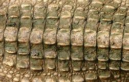 Pelle del coccodrillo Fotografie Stock