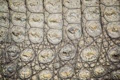 Pelle del coccodrillo Fotografia Stock