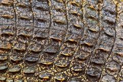 Pelle del coccodrillo Immagine Stock Libera da Diritti