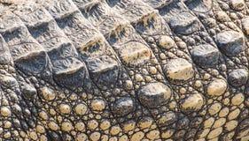 Pelle del coccodrillo di struttura Fotografie Stock Libere da Diritti