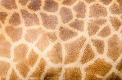 Pelle del cuoio genuino Fotografia Stock