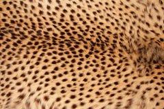 Pelle del ghepardo Fotografia Stock