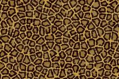 Pelle del leopardo Immagine Stock Libera da Diritti