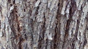 Pelle dell'albero Fotografie Stock Libere da Diritti