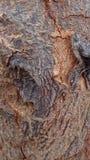 Pelle dell'albero Fotografia Stock