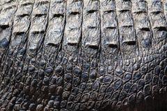 Pelle dell'alligatore Immagine Stock