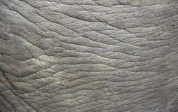 Pelle dell'elefante. Fotografia Stock