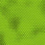 Pelle dell'iguana Fotografia Stock Libera da Diritti