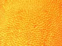 Pelle della frutta del Jack Immagini Stock