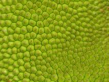 Pelle della giaca Fotografia Stock