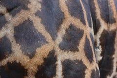 Pelle della giraffa Immagine Stock