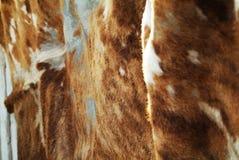 Pelle della mucca Immagine Stock