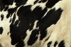 Pelle della mucca Fotografia Stock