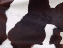 Pelle della mucca da latte Fotografia Stock Libera da Diritti