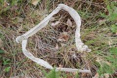 Pelle della tettoia del serpente vivente dopo muta Immagini Stock Libere da Diritti