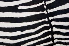 Pelle della zebra Immagini Stock Libere da Diritti