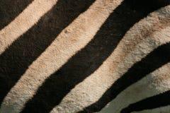 Pelle della zebra Fotografia Stock