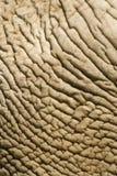 Pelle di Elefant Fotografie Stock