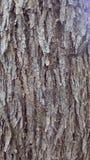 Pelle di legno del tronco Immagini Stock Libere da Diritti