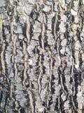 Pelle di legno di struttura Immagini Stock