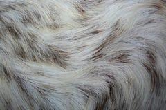 Pelle di maiale come fondo immagini stock libere da diritti