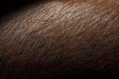 Pelle di maiale del primo piano Pelle di maiale di Brown Immagine Stock