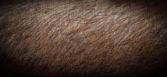 Pelle di maiale del primo piano Pelle di maiale di Brown Fotografia Stock