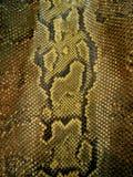 Pelle di serpente Immagini Stock