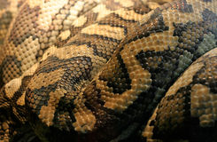 Pelle di serpente Immagine Stock Libera da Diritti