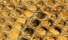 Pelle di serpente antica Fotografie Stock