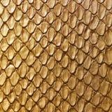 Pelle di serpente dell'oro Fotografia Stock Libera da Diritti