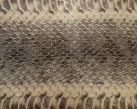 Pelle di serpente genuina Immagine Stock Libera da Diritti