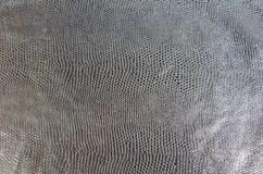 Pelle di serpente nera Fotografia Stock Libera da Diritti