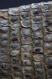 Pelle di serpente secca Fotografie Stock