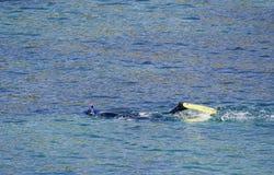 Pelle-immersione subacquea dell'uomo Fotografia Stock Libera da Diritti