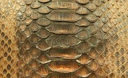 Pelle naturale del pitone Fotografie Stock Libere da Diritti