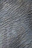 Pelle spiegazzata dell'elefante Fotografie Stock Libere da Diritti