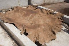 Pelle in una conceria nel Marocco Fotografie Stock