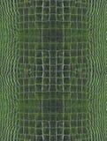 Pelle verde del coccodrillo Fotografia Stock