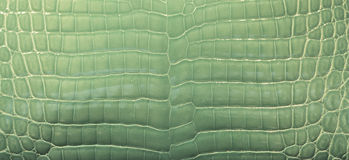 Pelle verde del coccodrillo Immagine Stock