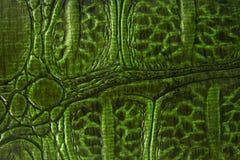 Pelle verde del rettile Fotografie Stock
