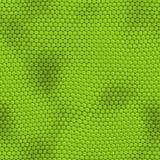 Pelle verde senza giunte dell'iguana Fotografie Stock