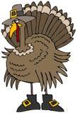 Pellegrino della Turchia Immagini Stock