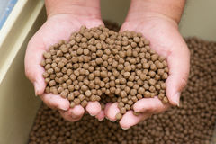 Pellet fsh feed. On hand Stock Photography